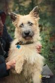 Ищет дом царь собак - изумительный молодой пёс