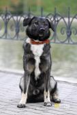 Лютик умный и спокойный пес ищет постоянный дом!