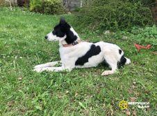 Невероятной красоты собака Милли (можно Муля) ищет любящую семью