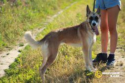 Адель - позитивная собака в дар!