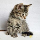 Три маленьких котёнка-найдёныша в добрые руки