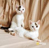 Красавцы-котята, ласковые, умненькие детки в добрые руки
