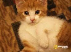Рыжие котята в добрые руки