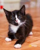 Котёнок-электровеник Фил в дар