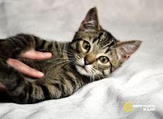 Игривый и весёлый котёнок Хвостик в дар. 4 месяца