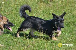 Небольшие коротколапые щенки-подростки в дар. Вырастут менее 15 кг.